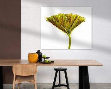 Plant restructured von Piet de Winter