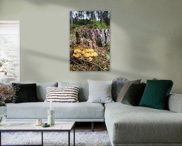 paddenstoelen in het bos van Melissa Wellens