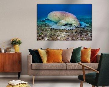 Zeekoe onderwater von AGAMI Photo Agency
