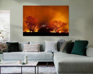 Bosbrand in de Pantanal, Brazilië. sur AGAMI Photo Agency