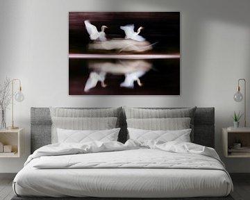 Vliegende Grote Zilverreigers met trage sluitertijd von AGAMI Photo Agency