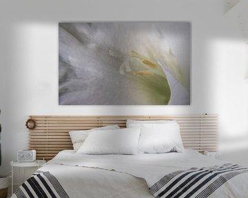 Weißer Gladiolus von Leo Luijten