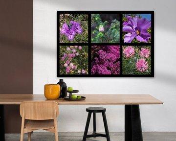 Collage Westaustralischer Wildblumen von Ines Porada