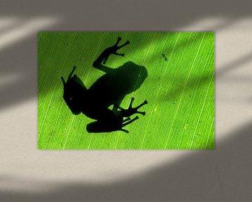 Kikker silhouet von AGAMI Photo Agency
