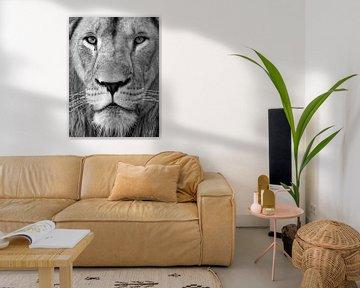 Zwart wit portrait foto van een Leeuw van Patrick van Bakkum