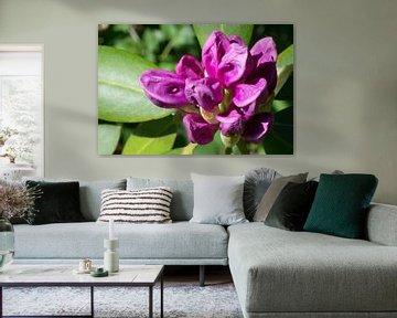 Violette Blume von Jan van Voorst Vader