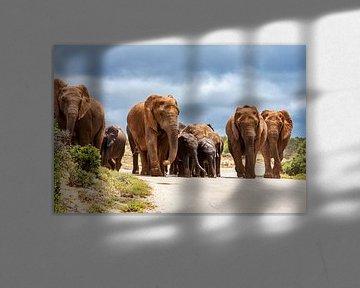 Olifantenkudde in Addo Elephant National Park