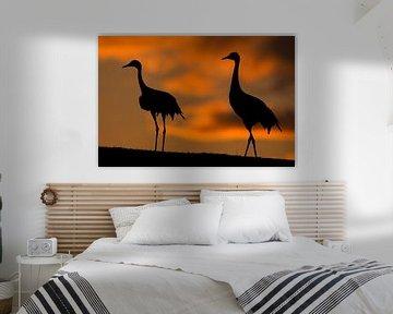 Europese Kraanvogel staand met ondergaande zon van AGAMI Photo Agency