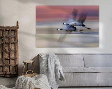 Europese Kraanvogel vliegend von AGAMI Photo Agency