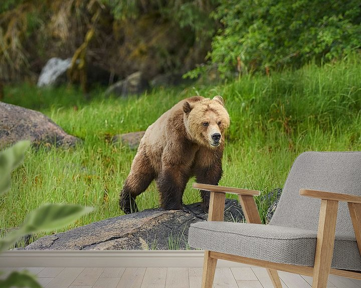 Sfeerimpressie behang: Grizzly van Gerard Oonk
