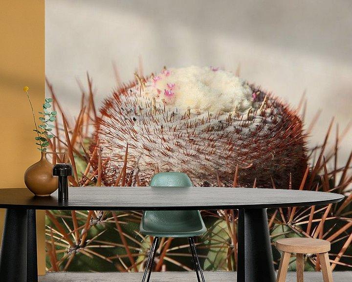 Sfeerimpressie behang: cactus cactussen melocactus van Frans Versteden