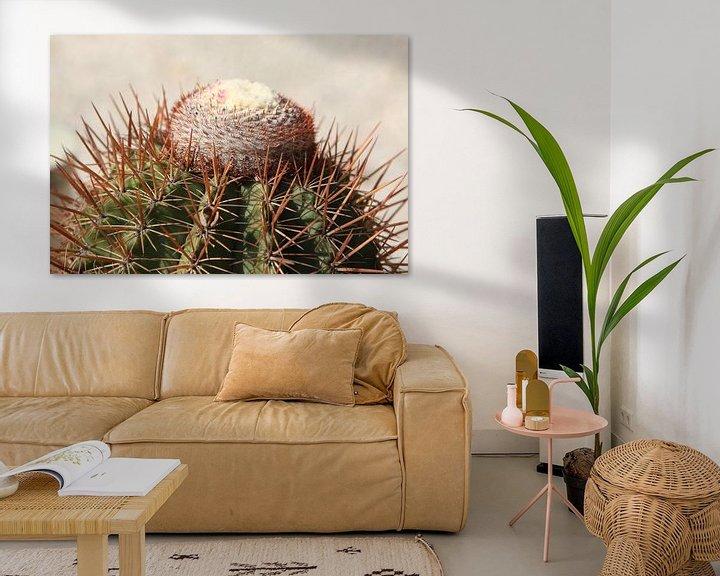 Sfeerimpressie: cactus cactussen melocactus van Frans Versteden