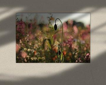 Bloemen van Janine van Lagen