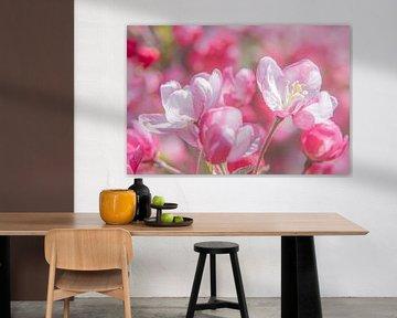 Blumen eines dekorativen Apfelbaums von Hanneke Luit