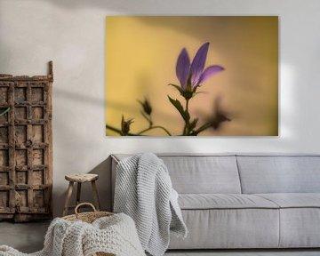 weich und lila von Tania Perneel