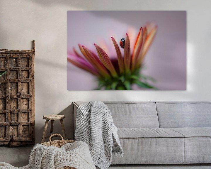 Beispiel: Marienkäfer auf Echinacea von Tania Perneel
