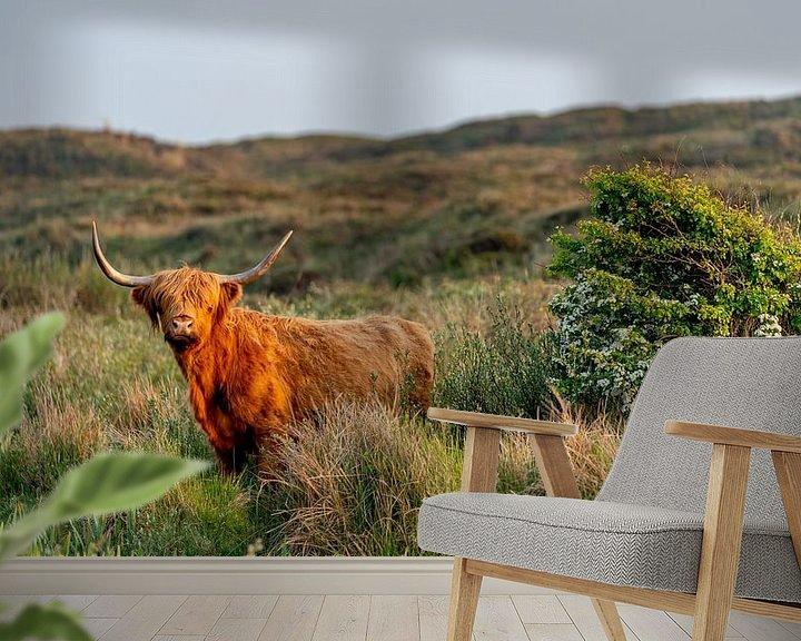 Sfeerimpressie behang: Schotse Hooglander bollenkamer Texel 16/9 van Texel360Fotografie Richard Heerschap