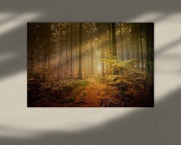 betoverde bos van Sonja Tessen