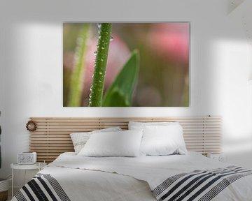Tulpe im Regen von Sonja Tessen