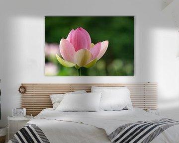 Lotusblüte von Sonja Tessen