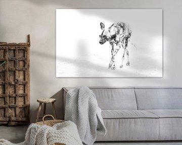 Wildhund von Robert Styppa