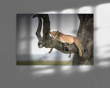 Leeuw in een boom van Robert Styppa
