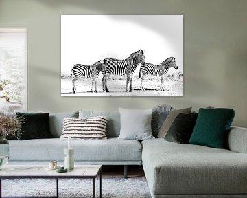 3 Zebras van Robert Styppa