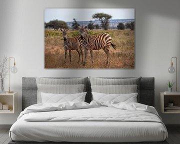Zebra's in Kenia von Andy Troy