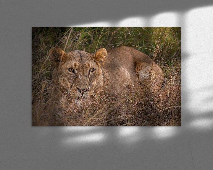 Impression: Leeuwin in Ol Pejeta Kenia sur Andy Troy