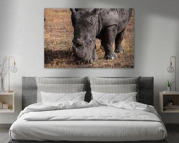 Neushoorn in Ol Pejeta Kenia von Andy Troy