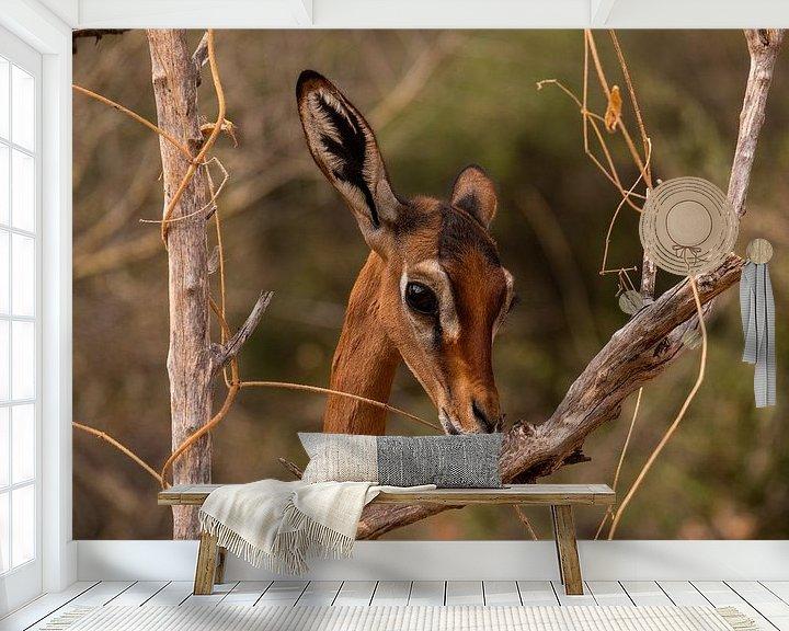 Impression: Antilope in Samburu county, Kenia 2 sur Andy Troy