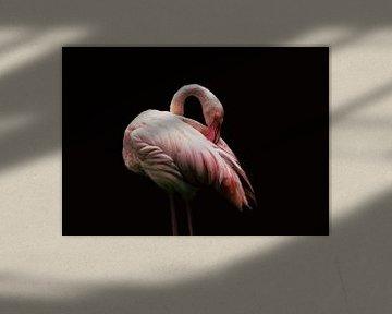 Flamingo von Stephanie Kweldam-Beugelink