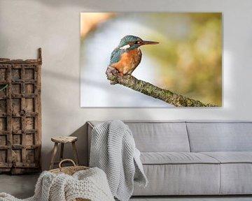 Vogels | IJsvogel vrouwtje roept het mannetje van Servan Ott