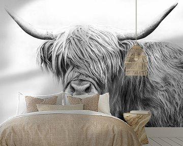 Schotse hooglander van Felix Brönnimann