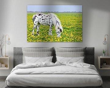 Pferd oder Pony in Weide mit gelbem Löwenzahn von Ben Schonewille