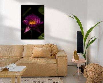 Paarse Lotus sur Schram Fotografie