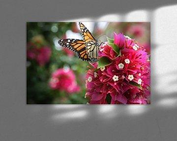 vlinder op bloem von Frans Versteden