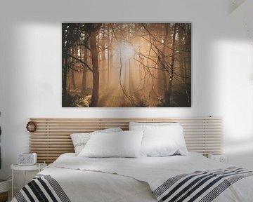 Tief stehende Sonne im Wald von Nicky Kapel