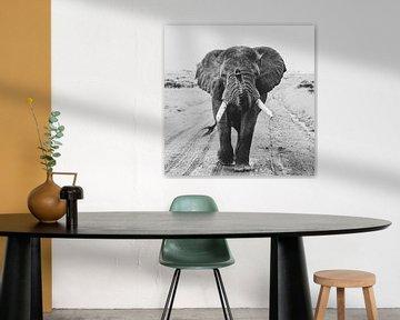 Hey you - olifant van Sharing Wildlife