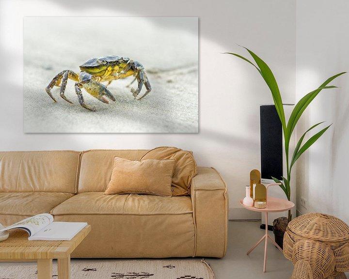 Sfeerimpressie: Krab op het strand van Mark Bolijn