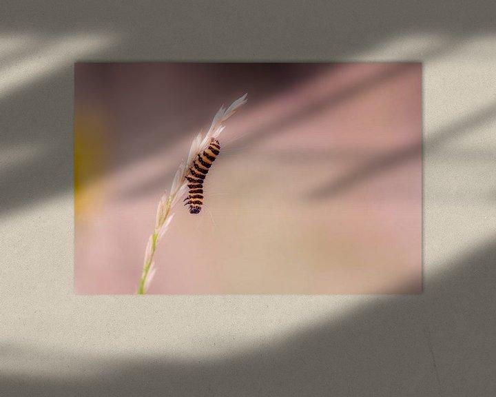 Beispiel: gelbe schwarze Zebra-Raupe von Tania Perneel