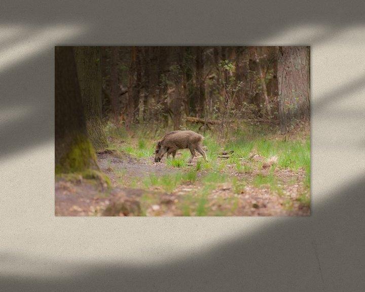 Beispiel: junge Wildschweine von Tania Perneel