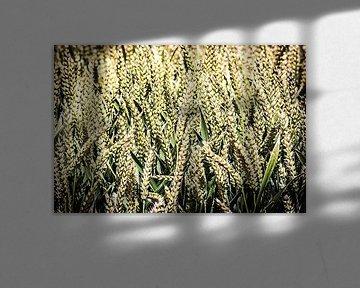Close-up van een graanveld van Fotografie Jeronimo