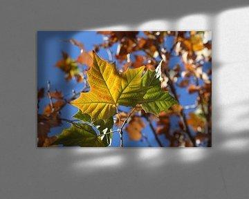 The Leaf van Cornelis (Cees) Cornelissen