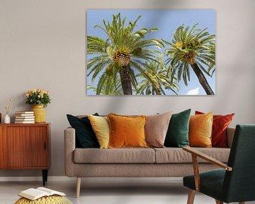 Palmbomen in Italië