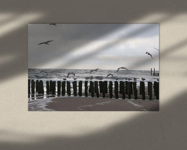 Sfeerimpressie: meeuwen op het strand in zeeland van Frans Versteden