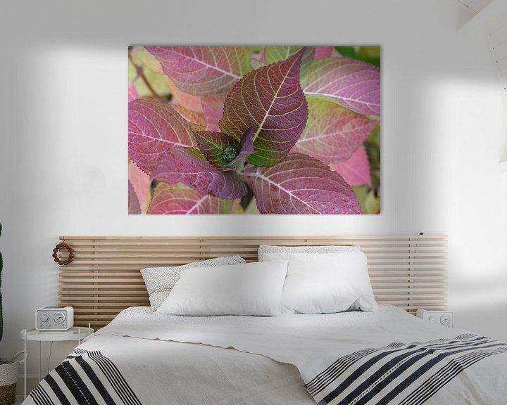 Sfeerimpressie: gekleurde bladeren van de hortensia van Frans Versteden