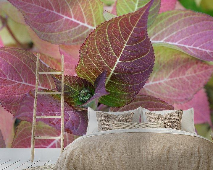 Sfeerimpressie behang: gekleurde bladeren van de hortensia van Frans Versteden