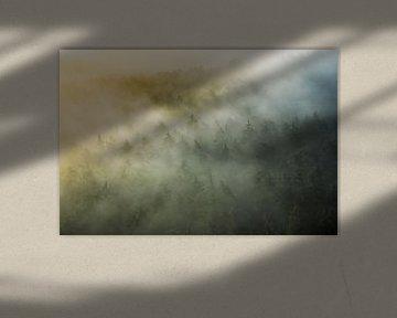 mystiek Pfalzisch Woud van Daniela Beyer