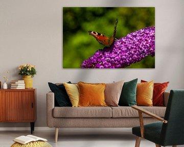Tageslichtauge auf Schmetterlingsbusch von Vinte3Sete